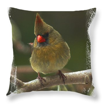 Beautiful Lady Cardinal Throw Pillow by Constantine Gregory