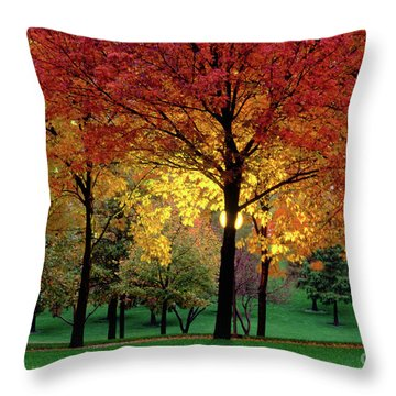 Beautiful Light At The Park In St. Louis In Autumn Throw Pillow by Wernher Krutein