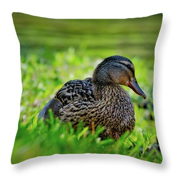 Throw Pillow featuring the photograph Beautiful Mama Duck by Linda Unger