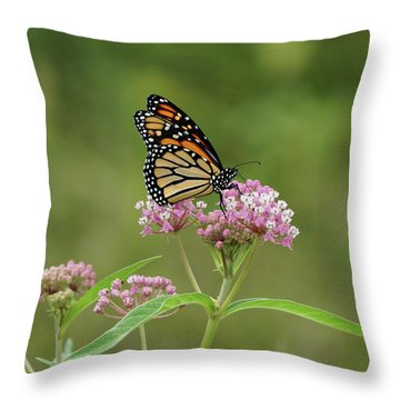 Beautiful Monarch Throw Pillow