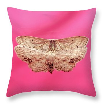 Beautiful Moth Wings Reflection Throw Pillow