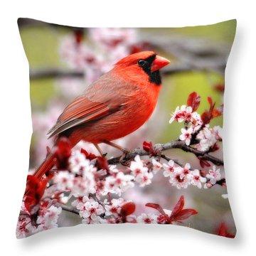 Beautiful Northern Cardinal Throw Pillow