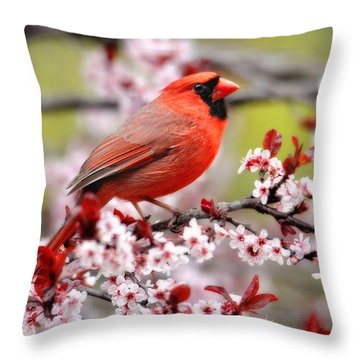 Beautiful Northern Cardinal Throw Pillow
