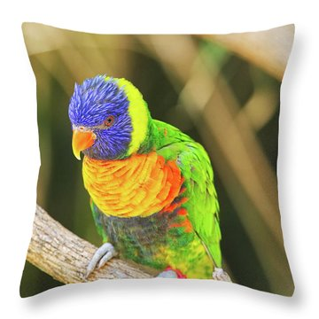 Beautiful Perched Mccaw On A Branch. Throw Pillow