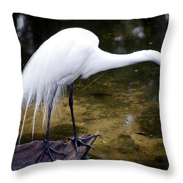 Beautiful Plumage Throw Pillow