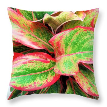 Throw Pillow featuring the photograph Beautiful Red Aglaonema by Ray Shrewsberry