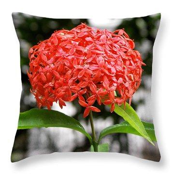 Beautiful Red Ixora  Throw Pillow