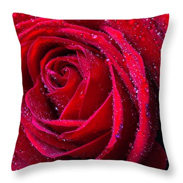 Beautiful Red Rose With Dew Throw Pillow
