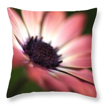 Beautiful Rich African Daisy Zion Red Flower Throw Pillow