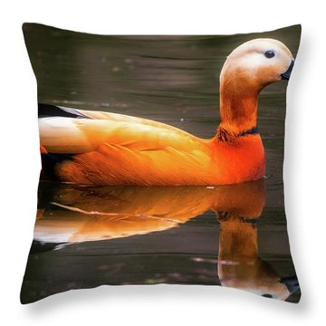 Throw Pillow featuring the photograph Beautiful Rust Goose by The 3 Cats