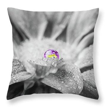 Beautiful Splash Of Purple On A Daisy In The Garden Throw Pillow