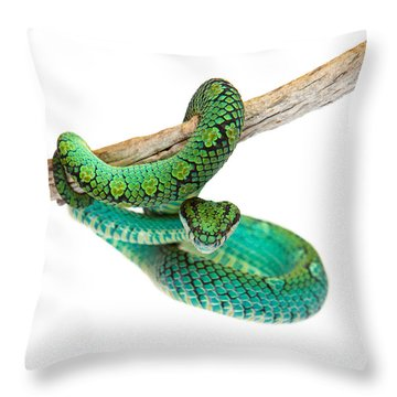 Beautiful Sri Lankan Palm Viper Throw Pillow