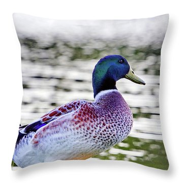 Beautiful Vibrant Mallard Duck Throw Pillow