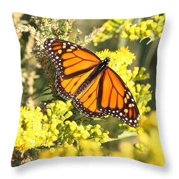 Beauty Defined Throw Pillow