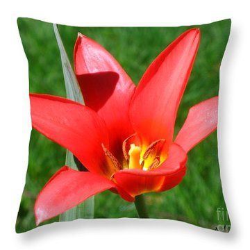 Throw Pillow featuring the photograph Beauty In Red by Maciek Froncisz