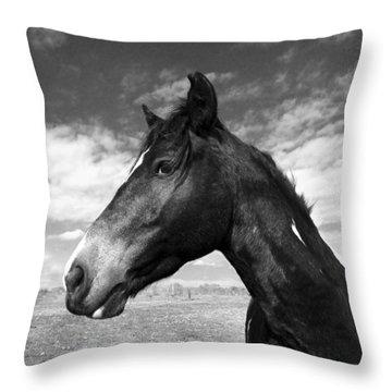 Horse Portraits Throw Pillows