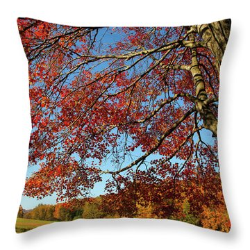 Throw Pillow featuring the photograph Beauty Of Fall by Karol Livote