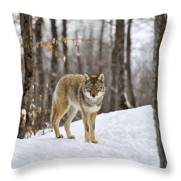 Beauty Of The Woods Throw Pillow