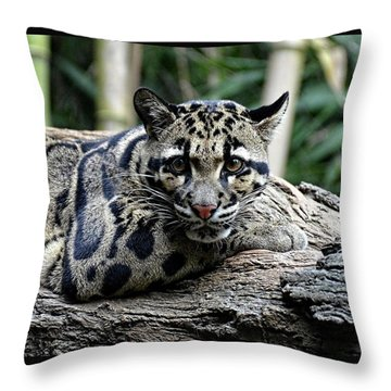 Clouded Leopard Beauty Throw Pillow