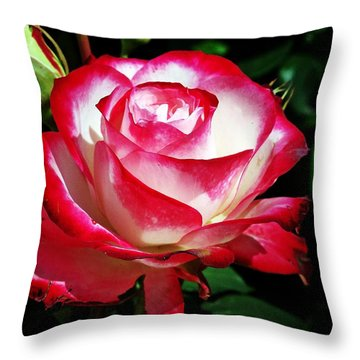 Throw Pillow featuring the photograph Beauty Rose by Joseph Frank Baraba