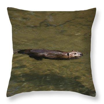 Beaver Swim Throw Pillow