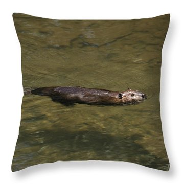 Beaver Swim Throw Pillow