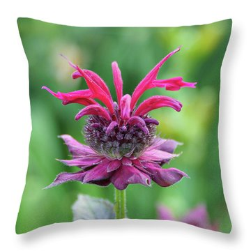 Bee Balm Throw Pillow