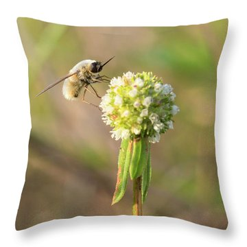 Bee Fly On A Wildflower Throw Pillow