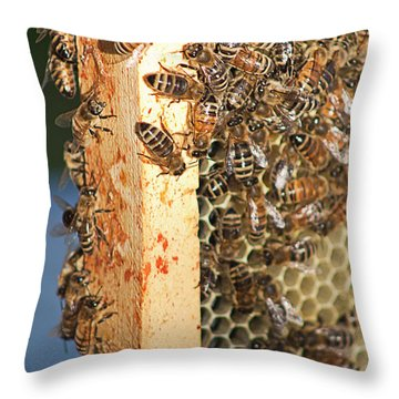 Bee Hive 4 Throw Pillow