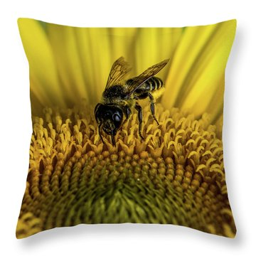 Throw Pillow featuring the photograph Bee In A Sunflower by Paul Freidlund