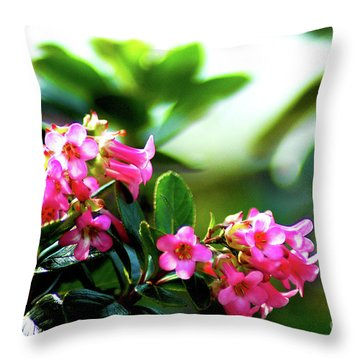 Throw Pillow featuring the photograph Bee In Flight by Micah May