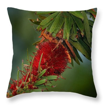 Bee In Red Flower Throw Pillow by Joseph G Holland