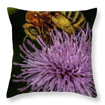 Throw Pillow featuring the photograph Bee On A Thistle by Paul Freidlund