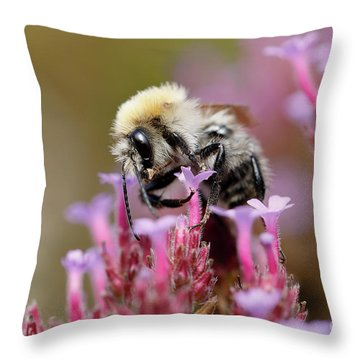 Throw Pillow featuring the photograph Bee On A Verbena Bonariensis by Nick Biemans
