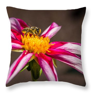 Bee On Dahlia Throw Pillow by Randy Bayne
