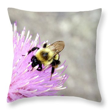 Bee On Pink Bull Thistle Throw Pillow by Meta Gatschenberger
