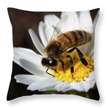 Bee On The Flower Throw Pillow by Bruno Spagnolo