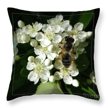 Bee On White Flowers 2 Throw Pillow by Jean Bernard Roussilhe