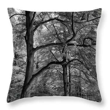 Beech Forest - 365-222 Throw Pillow by Inge Riis McDonald