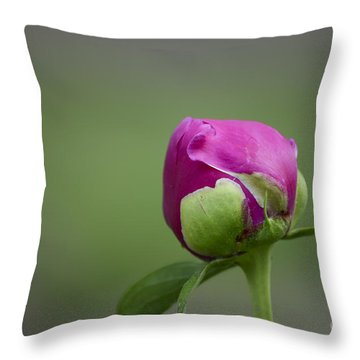 Simple Beginnings Throw Pillow