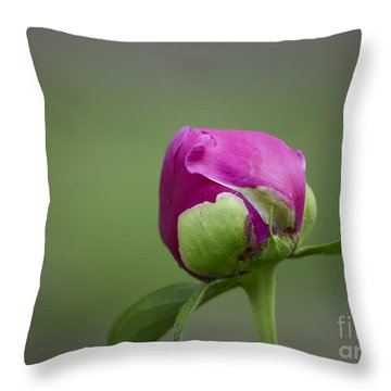 Simple Beginnings Throw Pillow by Andrea Silies