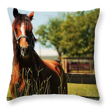 Behind The Septic Tank Throw Pillow