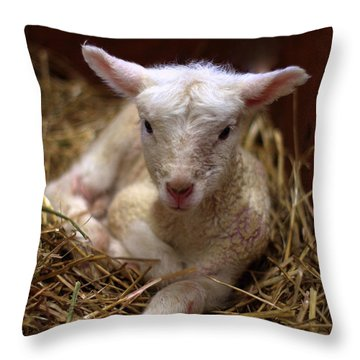 Behold The Lamb Throw Pillow by Linda Mishler