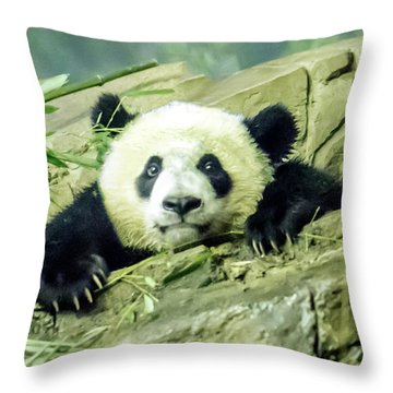 Bei Bei Panda At One Year Old Throw Pillow