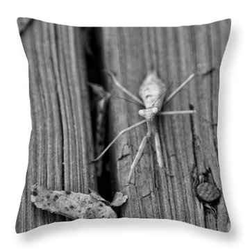 Being Judged  Throw Pillow