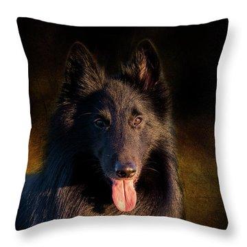 Belgian Groenendael Portrait Throw Pillow