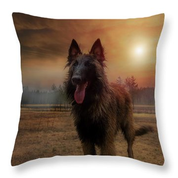 Belgian Shepherd Throw Pillow by Rose-Marie Karlsen