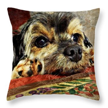 Bella's Thanksgiving Throw Pillow by Kathy M Krause