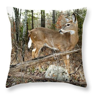 Beloved Tzav Throw Pillow by Bill Stephens