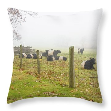 Belted Galloway Cows Farm Rockport Maine Photograph Throw Pillow